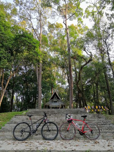 Bicyclelife Bicycling Takuapa Bicycle Forrest Photography Forrest Adventure Forrest Nature Forrest Shrine Shrines & Temples