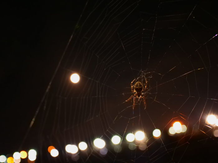 Low angle view of spider on web at night