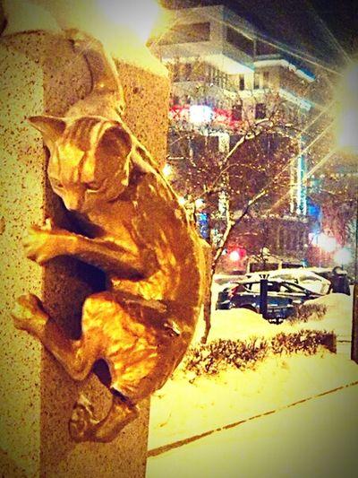 Kitten) Tobolsk Travel Photography