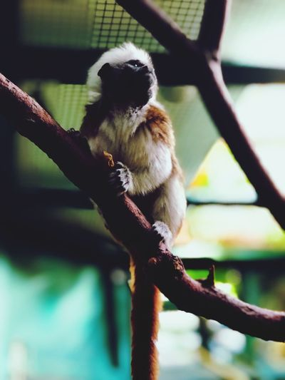 Animal Themes One Animal Animal Animal Wildlife Branch Animals In The Wild Tree Vertebrate Focus On Foreground Mammal Primate Plant No People Day Zoology Low Angle View Nature Outdoors Monkey Zoo