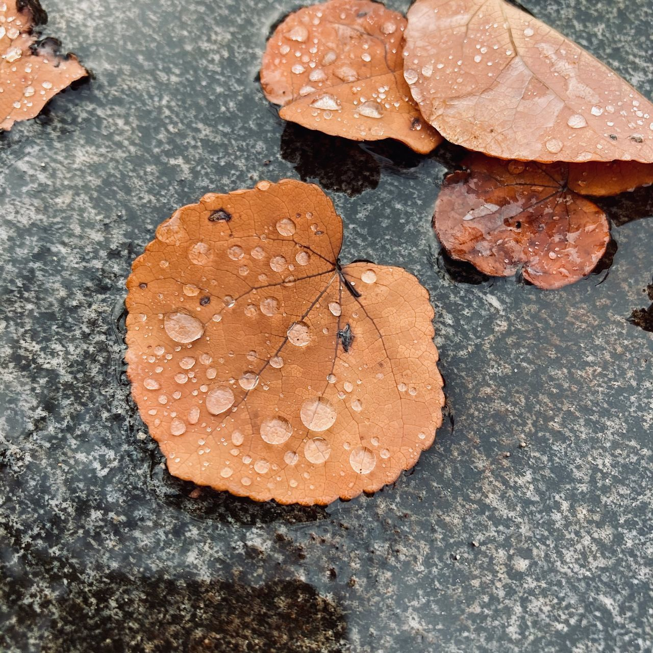HIGH ANGLE VIEW OF RAINDROPS ON LEAVES