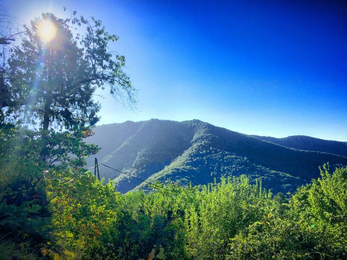 French mountains Mountain Scenics Tree Nature Landscape Mountain Range Beauty In Nature Tranquil Scene Blue Sky Tranquility Growth No People Outdoors Day