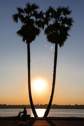 sunset time with two palms Beach Beauty In Nature Nature No People Outdoors Palm Tree Scenics Sea Silhouette Sky Sun Sunset Tranquil Scene Tranquility Tree Tree Trunk Water