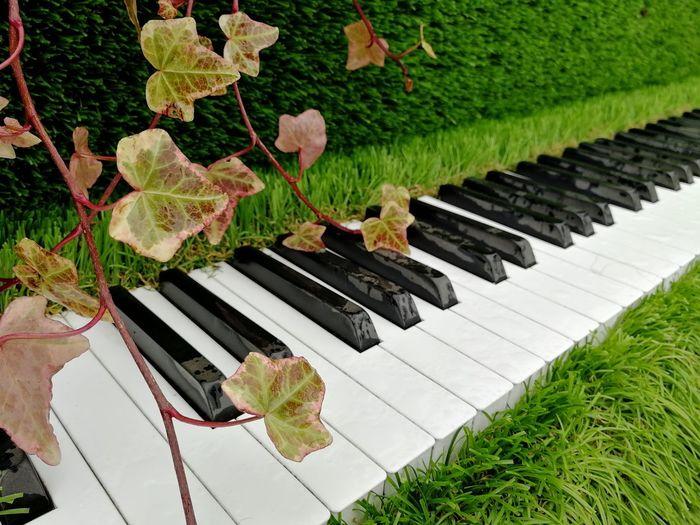 High angle view of piano keys on plant