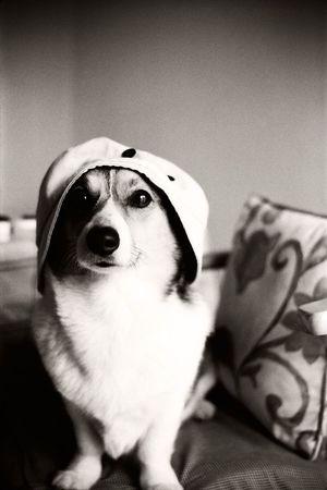 Dog Corgi Welsh Corgi Pochiko Model Camera Eye Portrait Dog Portrait B&w Monochrome Kodak Retina Icon Fujineopanacros100