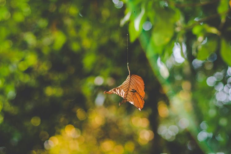 Beauty In Nature Change Day Flying Mid-air Nature Plant Plant Part Selective Focus Tree