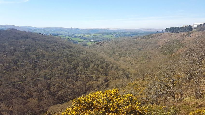 Landscape Nature Environmental Conservation Outdoors No People Beauty In Nature Scenics Sky Tranquility Nature Beautiful Day Freshness Springtime Clear Sky Devon Moors Dartmoor Dartmoor National Park Castle Drogo Forest