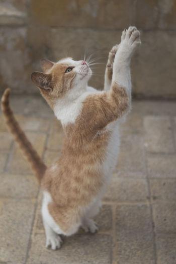 Animal Begging Begging Cat Begging Stay Cat Cat Cat In Alexandria,egypt Cats Of EyeEm Circus Cat Standing Cat Stray Cat Stray Cat In Alexandria