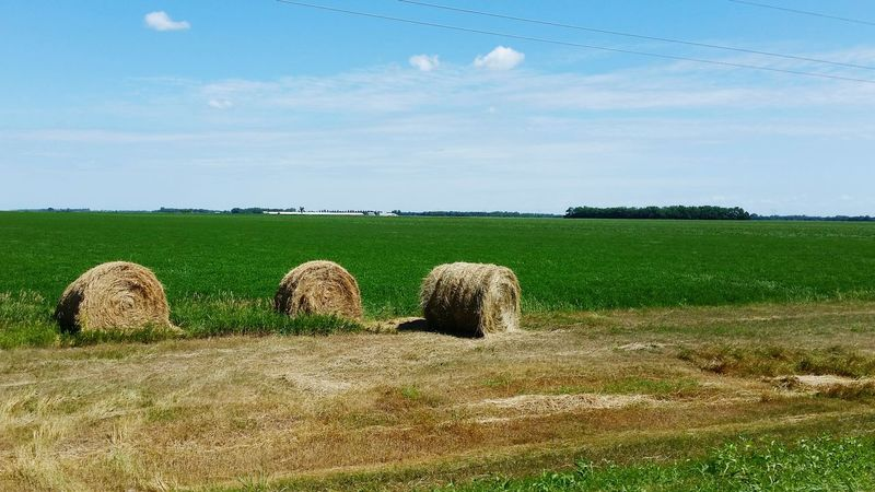Straw Bale Agriculture Alternate Agriculture Crop Field Agriculture Photography Agricultural Land Tranquil Scene Crops Tranquility