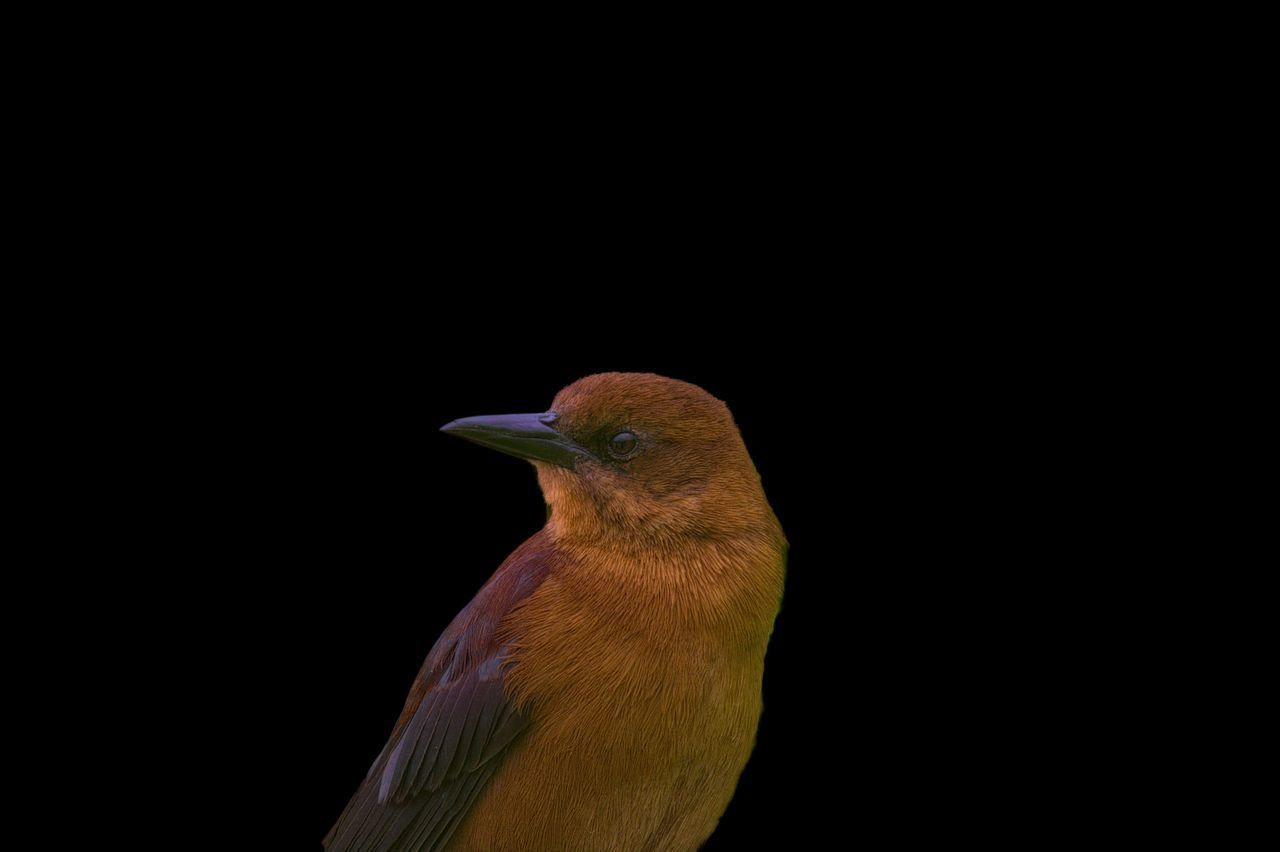 LOW ANGLE VIEW OF A BIRD LOOKING AWAY