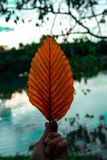 Autumn Body