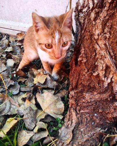 little cat #littlecat #gatos Bsas Pets Domestic Cat Feline Leaf Portrait High Angle View Animal Themes