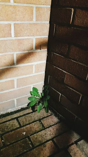 Plant Green Color Light And Shadow Wall Nature Is Free Nature Is Freedom Nature Is Everywhere Nature Is Strong Nature Is Stronger Than Anything Else Nature_collection Contrasts Contrasting Colors Nature Photography Naturelovers Colors Eyemphotography Eye4photography  EyeEm Gallery