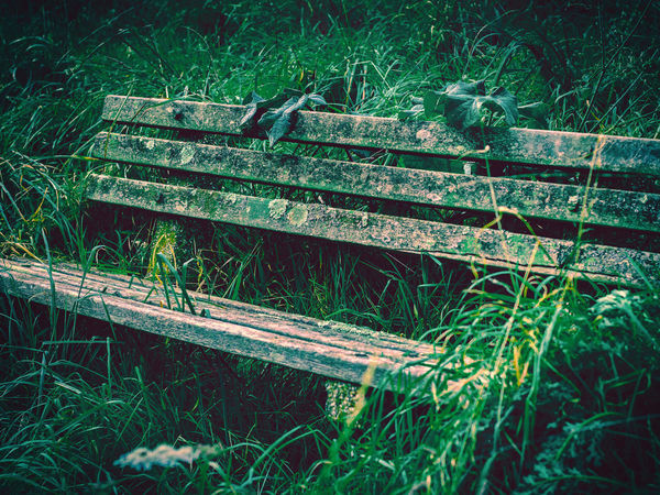 """Nobody Stops"" by Steve Dyke Abandoned & Derelict Abandoned Bench Abandoned House Abandoned Places Bench Decay Decaying Bench Forgotten Lonely Old Bench Overgrown Abandoned Benches Close-up Day Decaying Grass Growth Nature No People Outdoors Seat Wooden Bench"