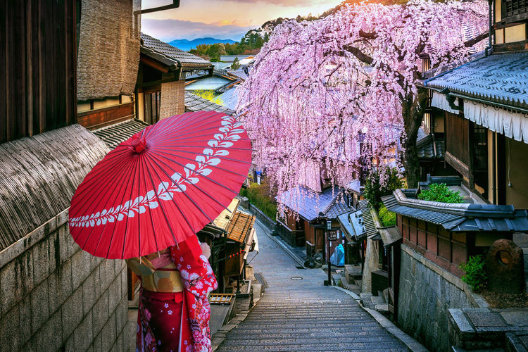 Woman wearing japanese traditional kimono walking at Historic Higashiyama district in spring, Kyoto in Japan. Built Structure Building Exterior Architecture Building Plant Tree Day Nature Flower Blossom Cherry Blossom House Flowering Plant No People Umbrella Growth Outdoors Springtime Cherry Tree