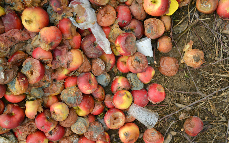 rotten apples Agriculture Apple Yellow Apple Apple - Fruit Disgusting  Fruit Fungal Funghi Garbage Infected Pollution Red Apple Rotten Rotten Apple Smell