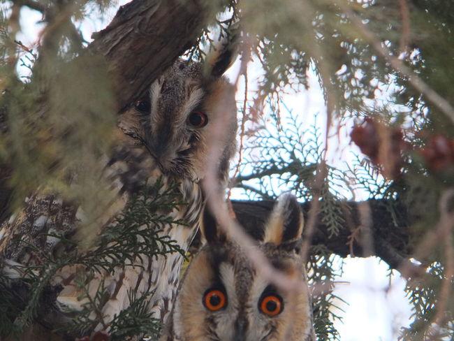 Day Nature Outdoors Urgup Uchisa Shades Of Winter Inner Power