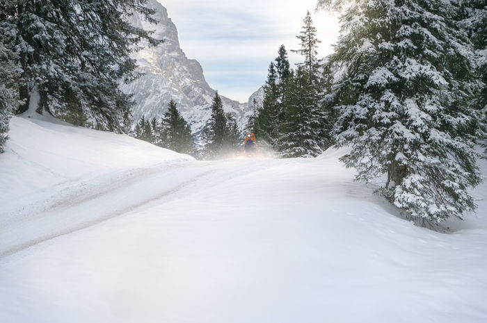 Winter landscape with snowy fir trees, hills covered in snow and a road through the Austrian Alps, in Ehrwald, Austria, on a sunny day. Austria Austrian Alps Austrian Nature Beauty In Nature Cold Season Cold Temperature Forest Mountain Nature Snow Snowy Trees Transportation Travel Destinations Tree White Color Winter