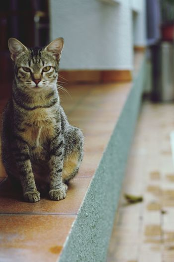 Cat view EyeEm Selects Domestic Cat Pets Domestic Animals Feline One Animal Indoors  Mammal