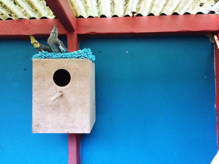 Pet Portraits Cage Wonder Blue No People Built Structure Architecture Birds Cockatiel