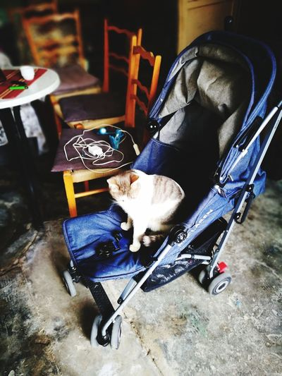 baby cat😂 Babycat Baby Stroller Moms & Dads High Angle View Close-up