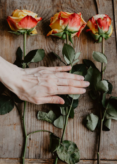 Person holding flowers on wood
