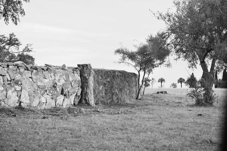 Corral de Piedra Blanco Y Negro Blackandwhite Corral De Piedra Outdoors Day Sky No People Nature Tree