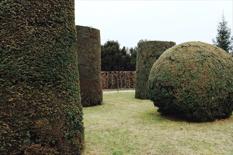 Garden Tree Topiary No People Day Nature Outdoors Clear Sky Grass Growth Beauty In Nature Tranquility Hay Bale