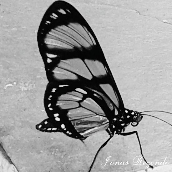 Jonas Rezende Hi! Hello World Nature Paraguaçu MG Brasil Black And White Black & White Vida