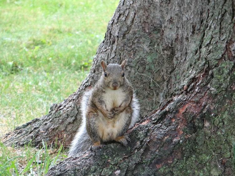 Squirrel Walking Around Taking Photos Holidays