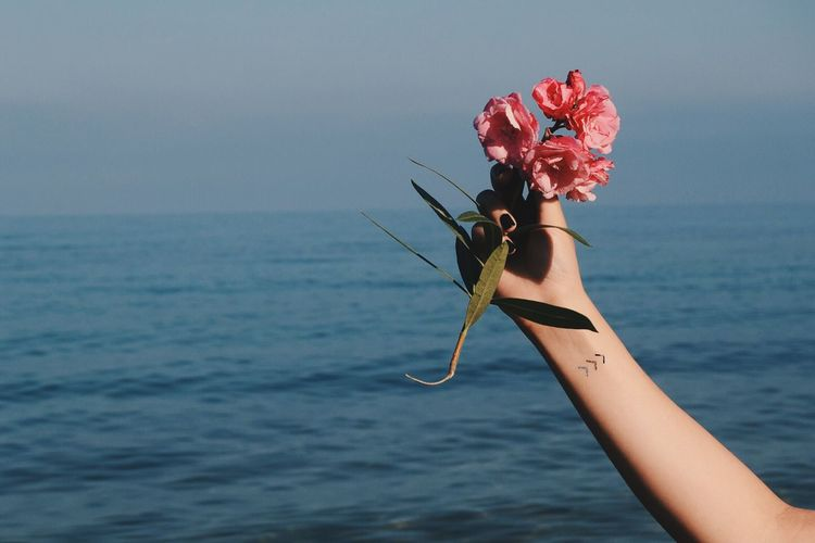 Cropped hand of woman holding flowers over sea against sky