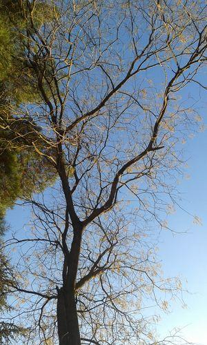 Yellowtree Winter Bluesky Aşkgökyüzünde