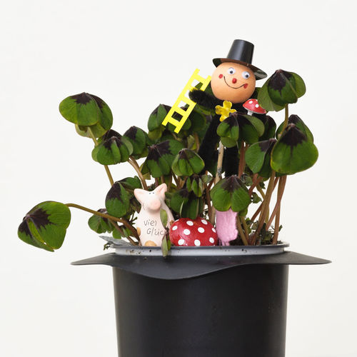 Happy new Year 2106 4 Leaf Clover Beginnings Chimney Sweeper Clover Freshness Happy New Year Lucky Pig Lucky Symbols Potted Plant Symbols New Years Resolutions 2016 New Year Around The World White Background
