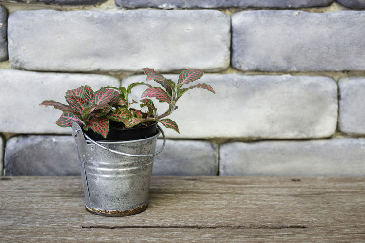 Mini plant pot