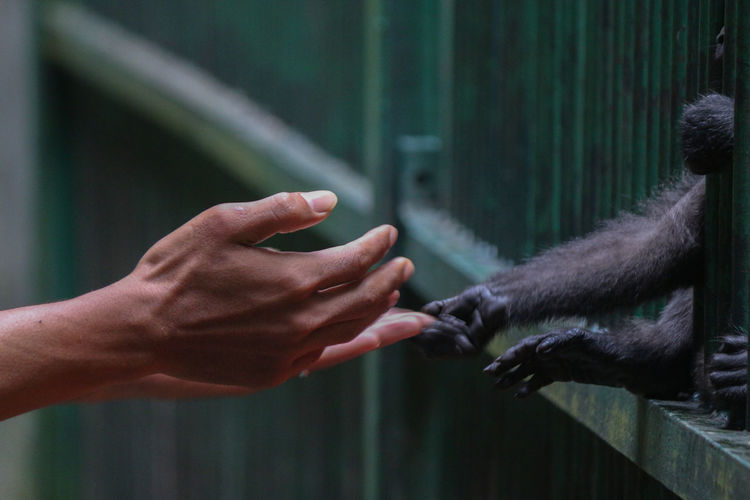 Close-up of hand holding animal hand