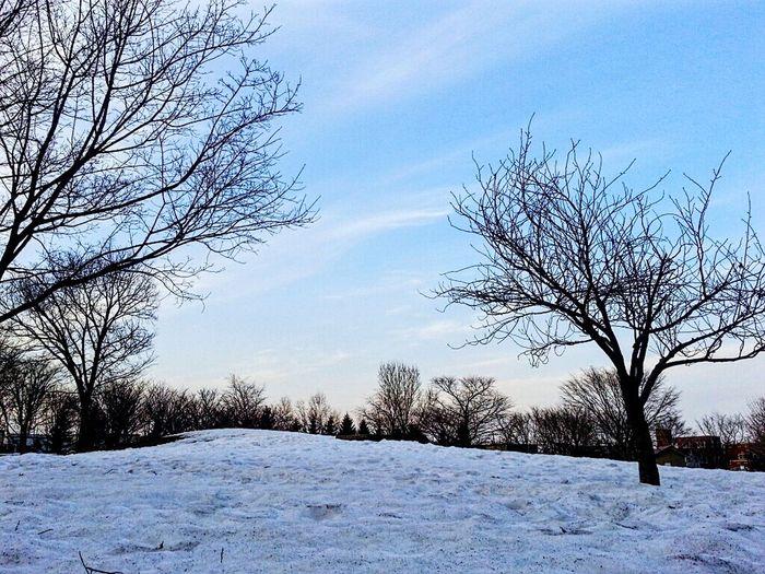 雪解けって毎年汚いなぁ 土や泥なら解るけどゴミも凄い…… 雪 雲 空 散歩 夕方