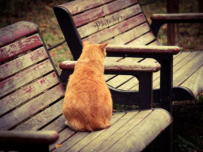 Cat Cat♡ Stray Cat 野良猫 猫 Animal Playing With The Animals Cat Lovers 哀愁 Photography