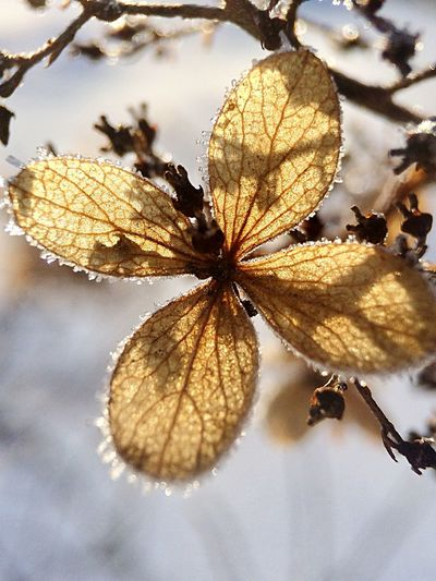 Winter flower..... Macro Beauty Structure And Nature Formation Of Nature Texture In Nature Macro Flowers Close-up Fragility Nature Leaf Beauty In Nature Flower Day Flower Head Growth Freshness