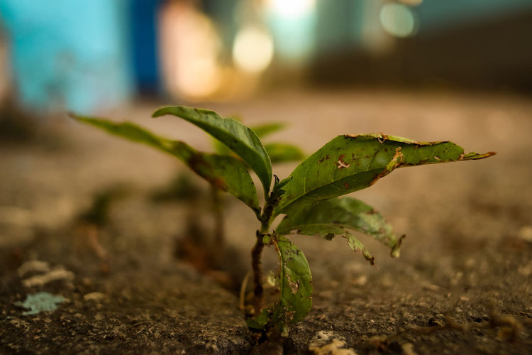 Through the concrete life grows! Green Color Plant Part Plant Growth Leaf Focus On Foreground Close-up No People Nature Day Selective Focus Land Outdoors Beauty In Nature Beginnings Field Dirt Freshness Plant Stem Spice Chris_jugar Chris_jugar Alliance88 EyeEm Best Shots EyeEm Premium Collection Chrispj_photos Raigaareli Raiga Arel