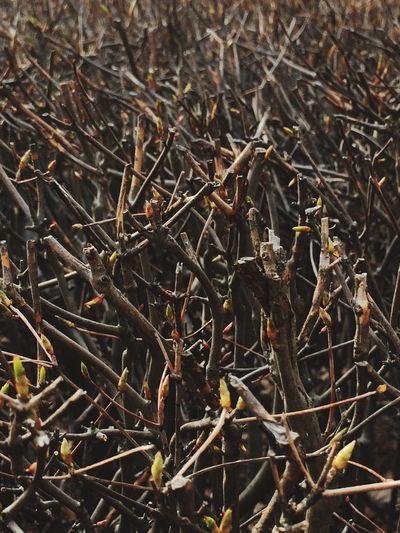 これから〜これから〜🌱が出るよ〜〜近くの公園で(^^) 春 枝 いいことありますように 願い