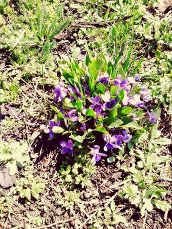 весна Hello World
