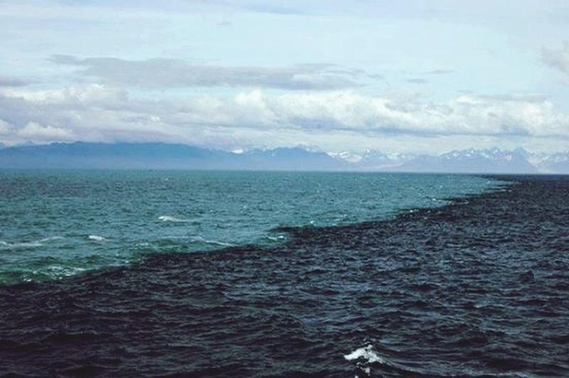 Alaska Love Sea Check This Out