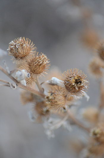 Plant Flower Flowering Plant Vulnerability  Fragility Close-up No People Nature Beauty In Nature Focus On Foreground Dry Selective Focus Freshness Wilted Plant Day Growth Plant Stem Tranquility Outdoors Dried Plant Dead Plant Flower Head Softness Dried Natural Condition
