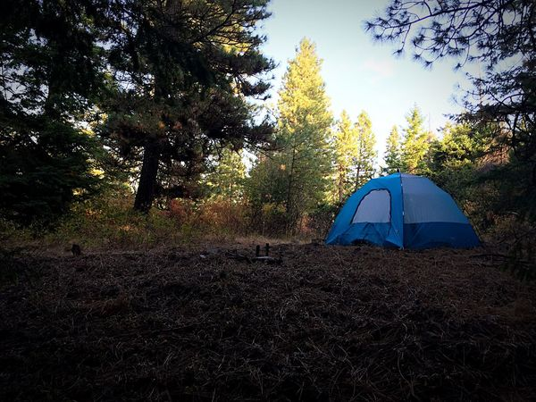 No Camp Fees Here Camping Back Woods Off The Beaten Path Tent Camping Trees Isolated Solitude Peace And Quiet Hanging Out Relaxing Taking Photos Enjoying Life Eyeem Collection