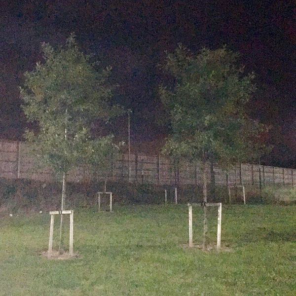 Tree Grass Lawn Landscape Fence Iphone6s IPhoneography Night