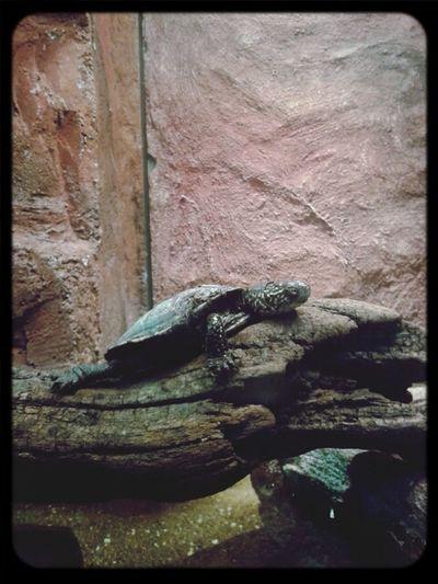 Taking Photos Animal_collection Artis  Turtle