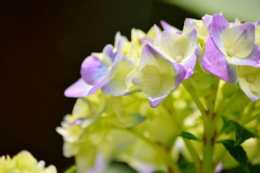 Happy forever Flower Collection Flowerporn EyeEm Nature Lover EyeEm Best Shots - Nature