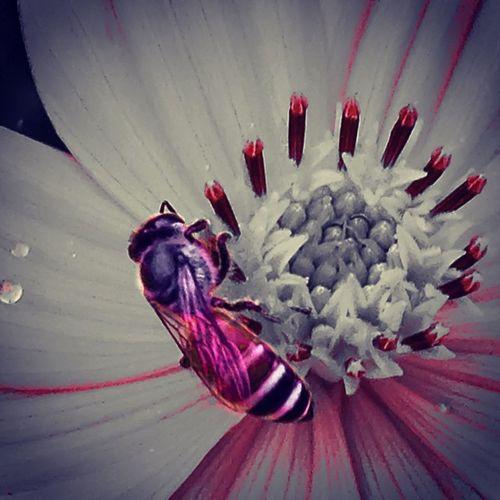 ผึ้งน้อยหาน้ำหวานบนดอกไม้ ผึ้ง HoneyBee Bee Flower art