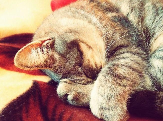 Pets Corner Pet Pets Cute Sleeping Cat Love
