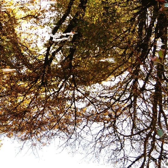 Photography Water Lake Reflection Tree Reflection In Water Autumn Nature Beauty In Nature
